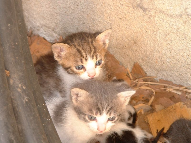 Donne chatons et chats adultes
