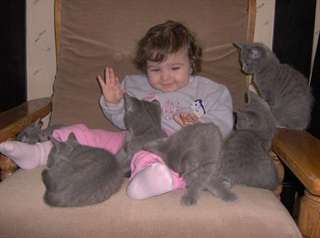 Chaton Type Chartreux A Donner